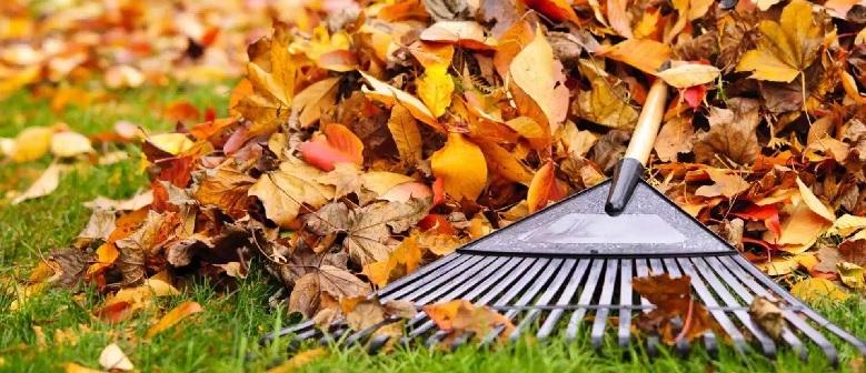 Locas por incordiar. Las causas del incremento estacional del número de moscas en otoño