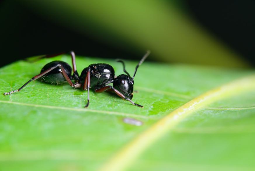matar colonia hormigas
