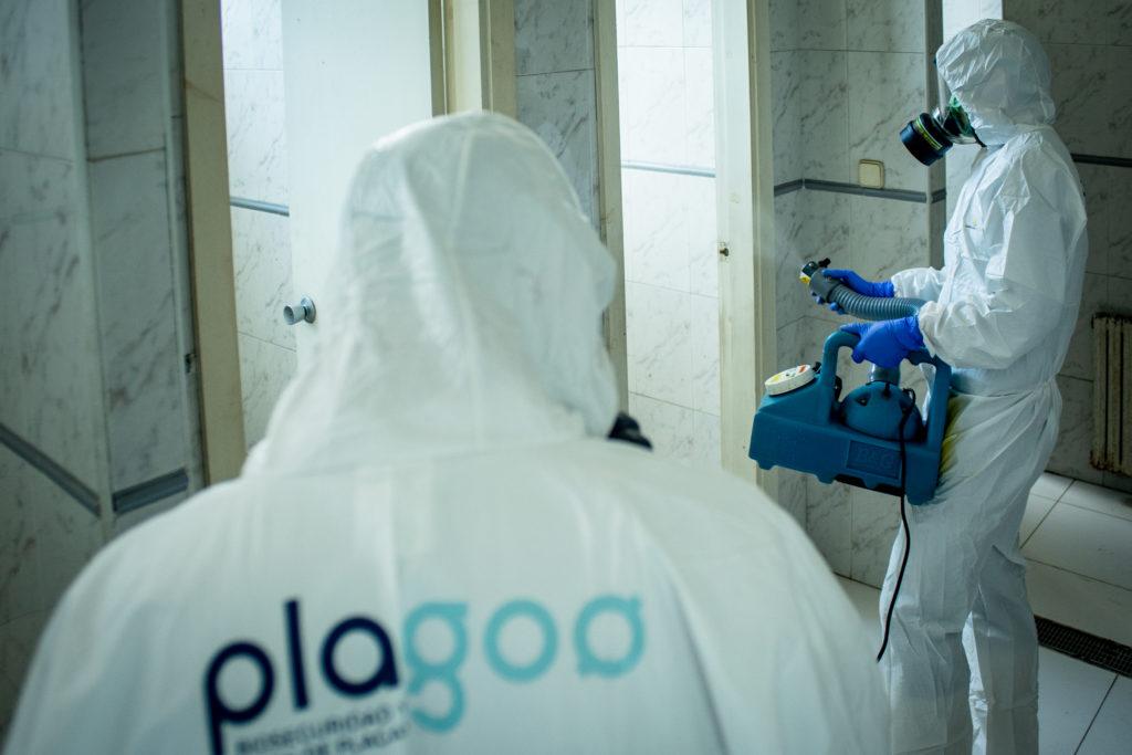 Eliminar plaga pulgas