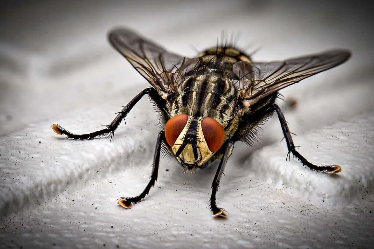 ¿Cómo eliminar plagas de moscas?