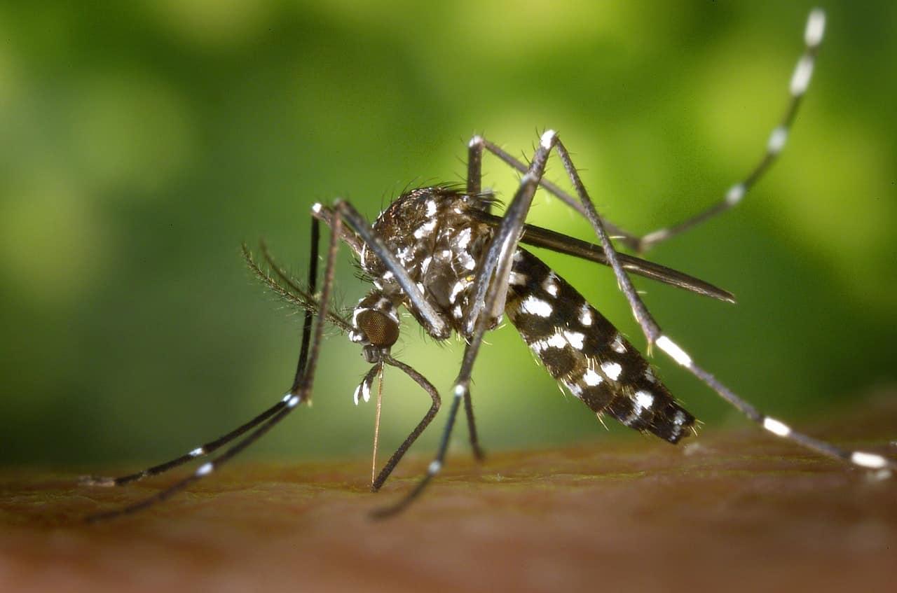 ¿Cómo eliminar una plaga de mosquitos?