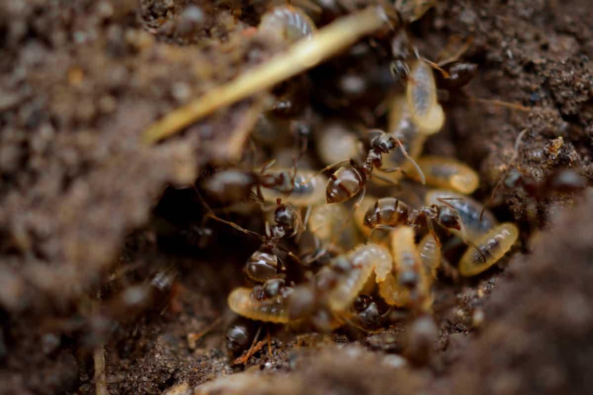 ¿Diferencias entre termitas y carcoma?