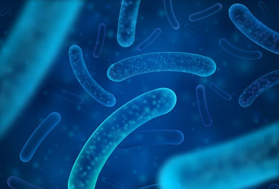Legionella en el medio natural